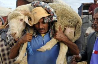 Aid El Kébir: combien coûtent les moutons dans la région de Casa-Settat?