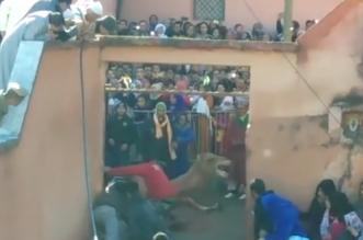 La vidéo d'un dromadaire égorgé sur la place publique choque la toile