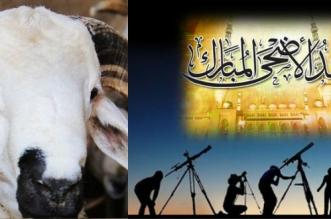 aid-mouton2