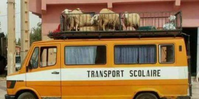 Vu sur le web: le transport scolaire version Aid El Kébir