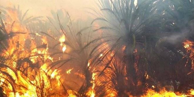 Tata: des milliers de palmiers dévorés par les flammes