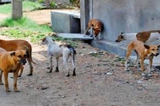 Abattage des chiens errants: un président de commune persiste et signe